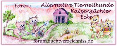 Katzen-Forum